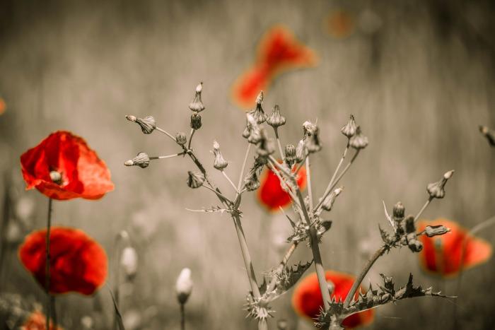 flowers-613586_1920